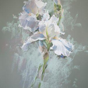 Белый ирис White iris 62×47. 2013