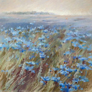 Cornflower field 53×53. 2011