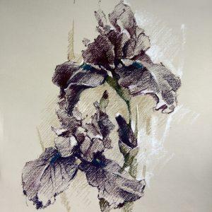 Ирис графический Iris graphic 55×65. 2014