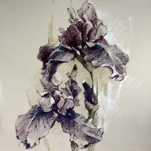 Iris graphic 55×65. 2014