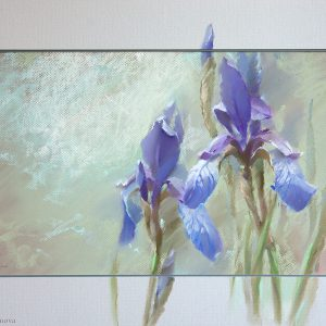 Siberian iris 40×60. 2012