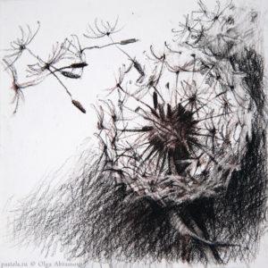 Dandelion 1 13×13