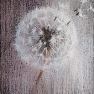 Dandelion 13×13,5. 2015