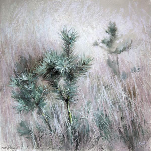 Pines 70×70. 2017