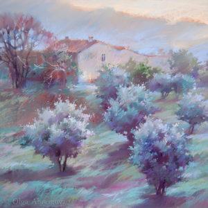 Оливковая ферма 47×62. 2017